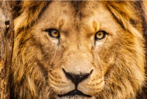 reino del león
